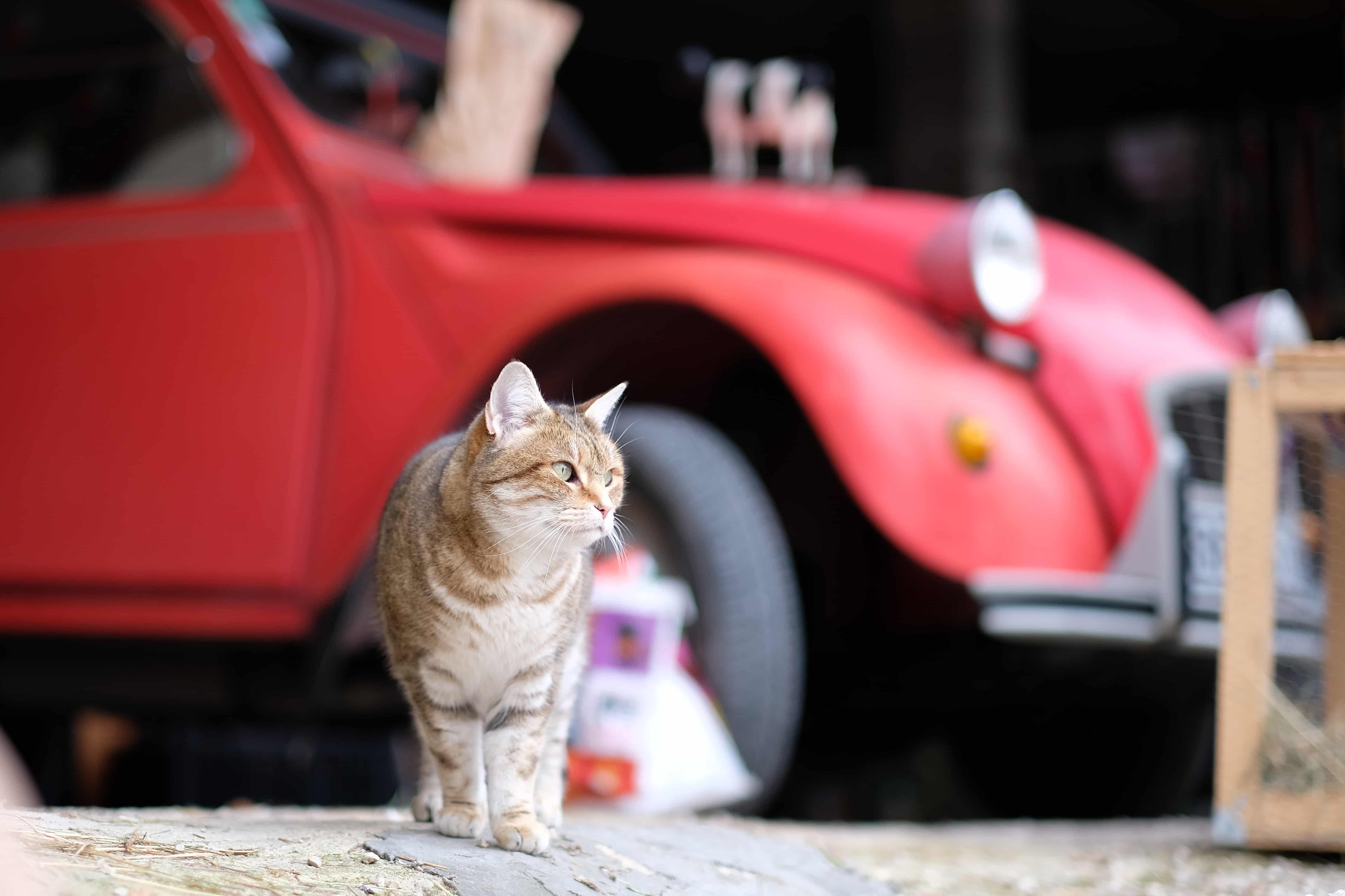 Un des chats : Pouky