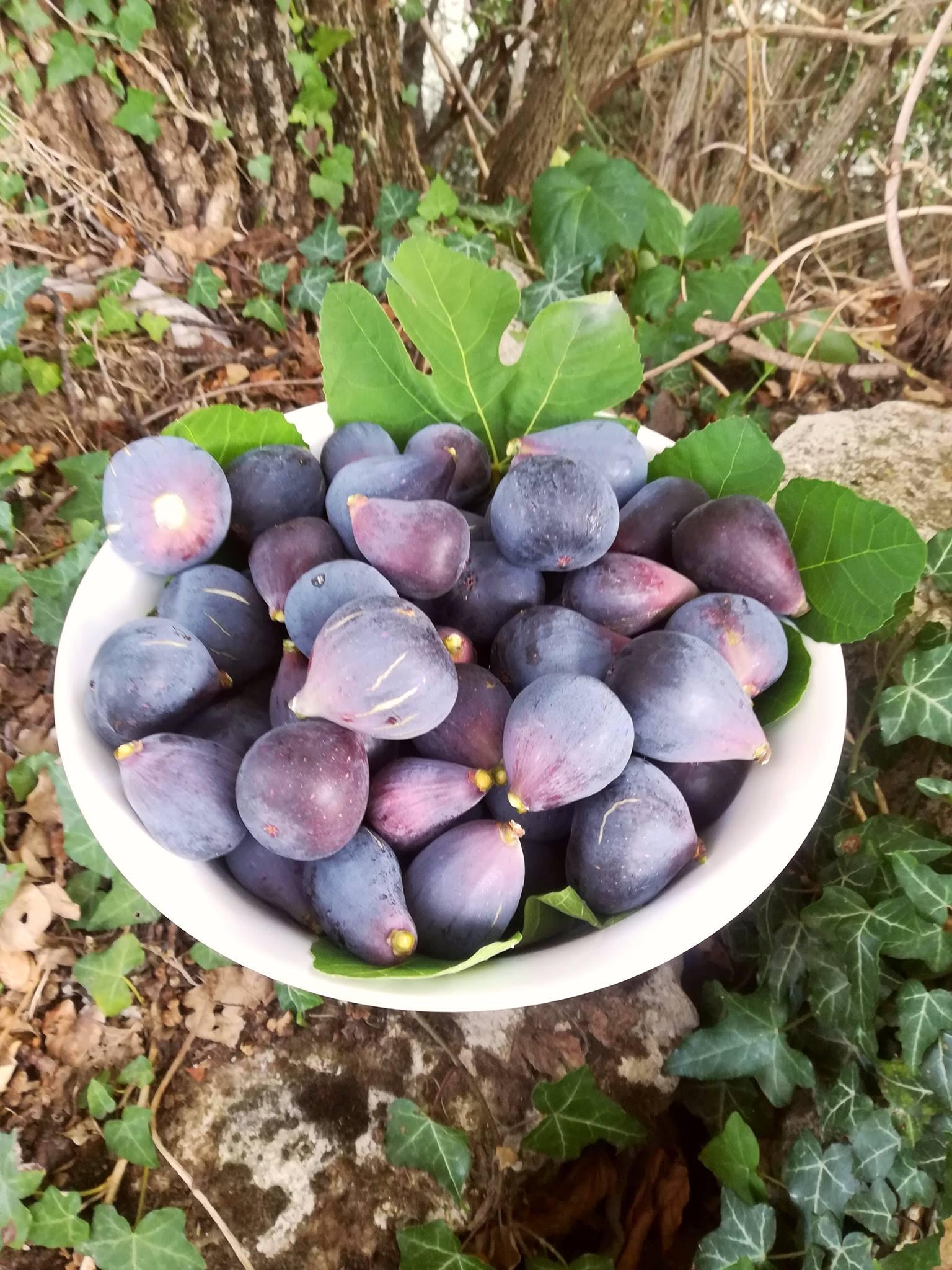 La récolte de figues